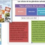 Tipos_Celulas_glandulas_Salivales